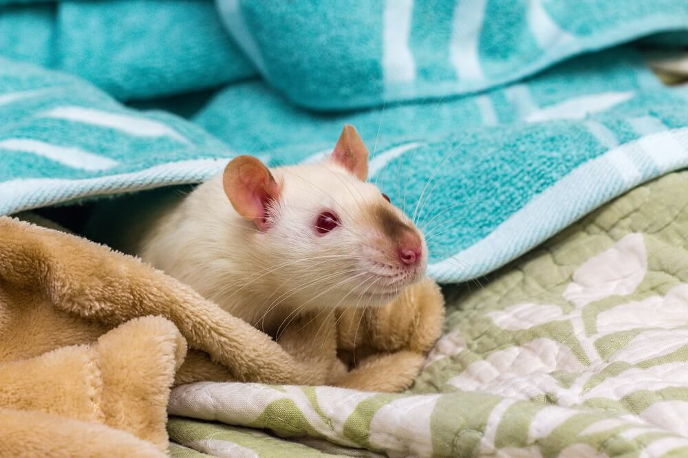 Rodents Veterinarian Boise
